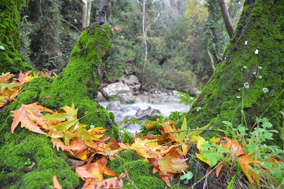 The forest and landscape restoration approach to managing the Shouf Biosphere Reserve