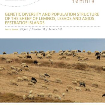 Genetic Diversity and Population Structure of the Sheep of Lemnos, Lesvos and Agios Efstratios Islands