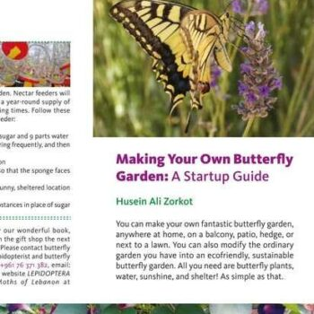 Making Your Own Butterfly Garden: A Startup Guide