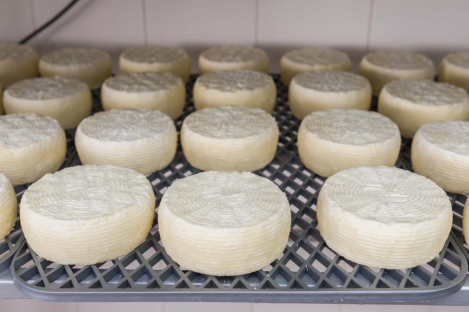 Melipasto/Melichloro cheese – a significant element of the intangible heritage of Lemnos