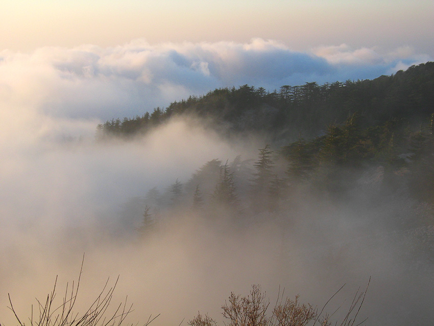 Misty forest in Shouf Biosphere Reserve, Lebanon, by Shouf Biosphere Reserve Cultural Landscape project