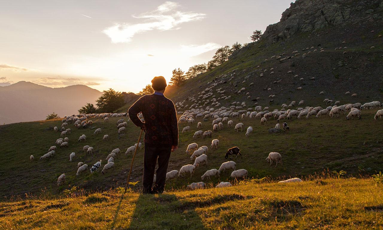 Mobile pastoralism in the Mediterranean | Alliance for Mediterranean Nature & Culture (AMNC)