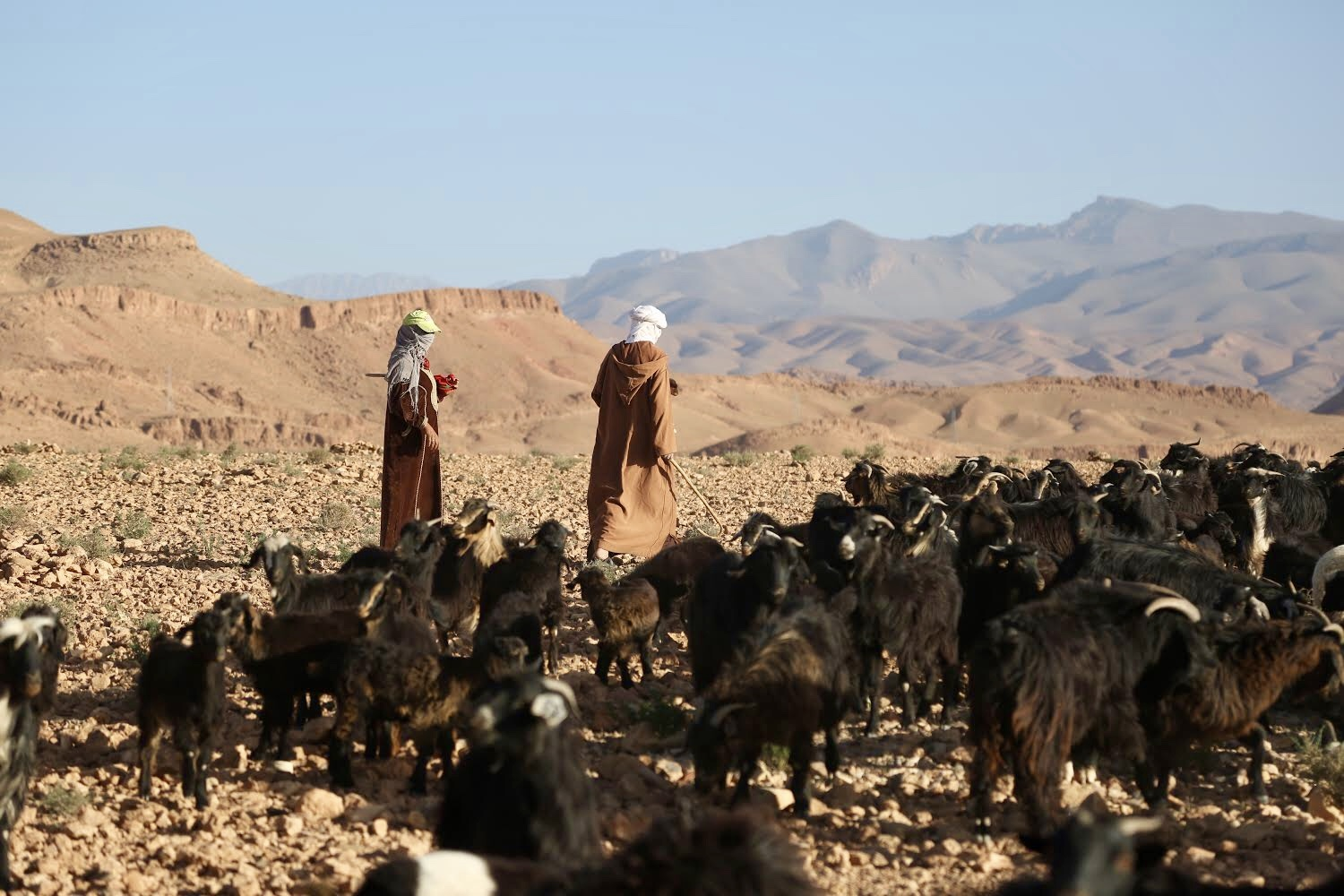 Documentation links between cultural practices and biodiversity | High Atlas Cultural Landscapes