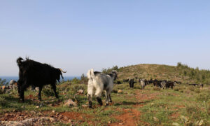 Biodiversity in Turkey, by Yolda Initiative | Mobile Pastoralism in Turkey